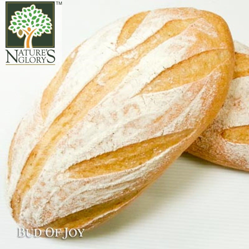 Bud of Joy Organic 20% Wholemeal Italian Herb Batard Bread (Freshly Baked)