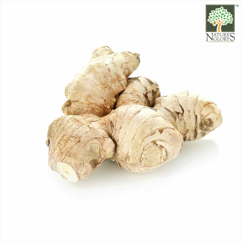 Ginger Aust OG.(NA 8131P) (Pre-Order Required)