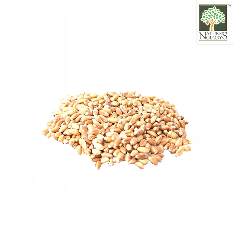 Hard Red Spring Wheat Grain Nature's Glory 1kg OG.