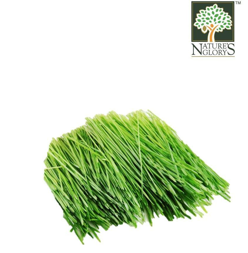 Wheatgrass Local
