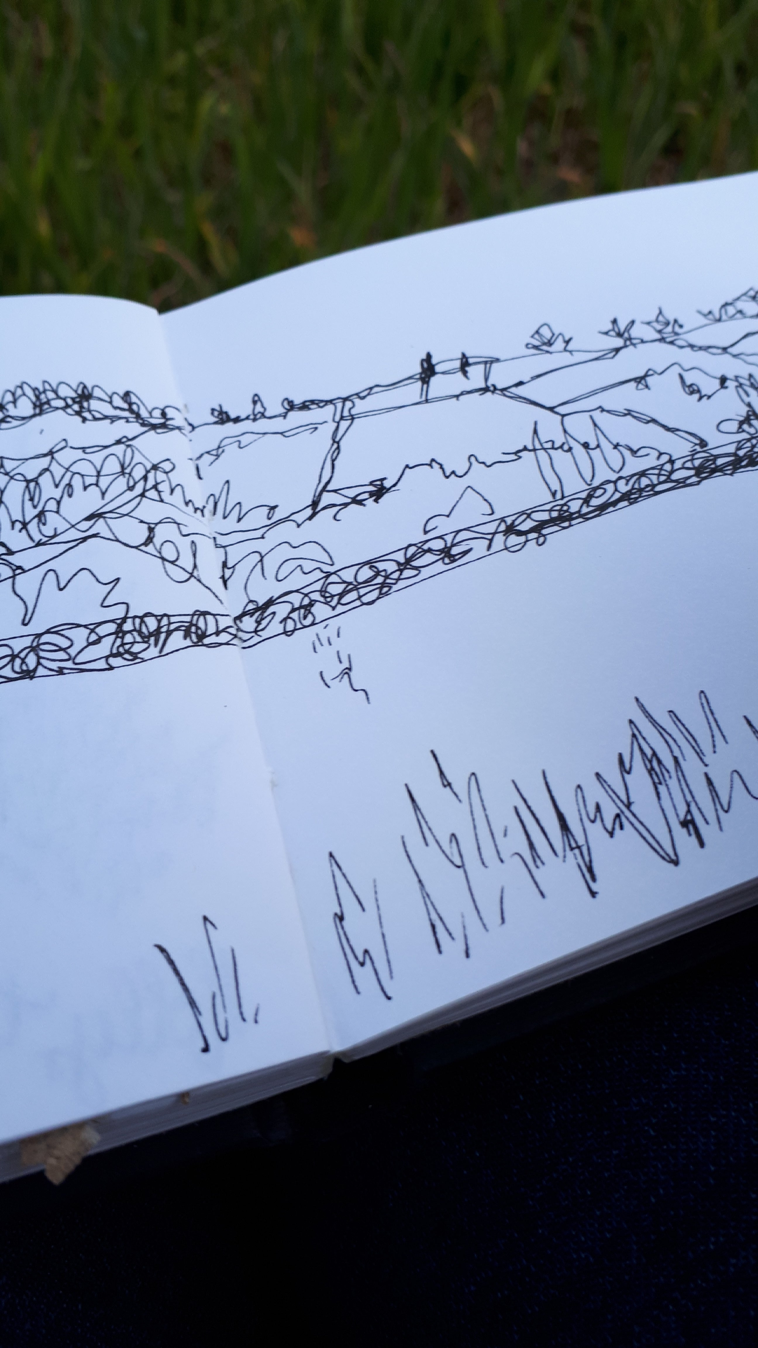 Field sketching by Alice Draws the Line, sketchbook study