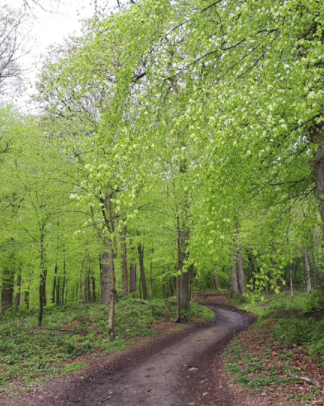 New Beech Leaves at Hergest Croft by Alice Draws the Line