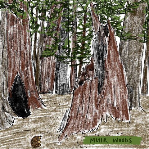 prickle the hedgehog in Muir Woods by Alice Draws The Line