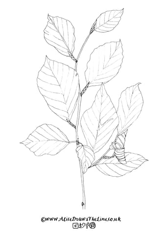 Autumn Beech Leaves to colour in by Alice Draws The Line