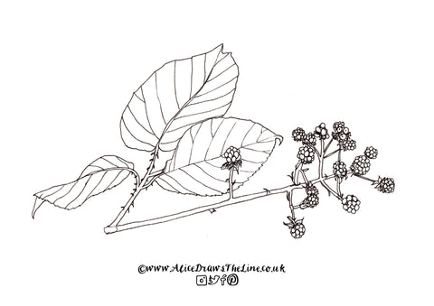 Free botanical colouring in sheet by Alice Draws The Line download, print and colour in