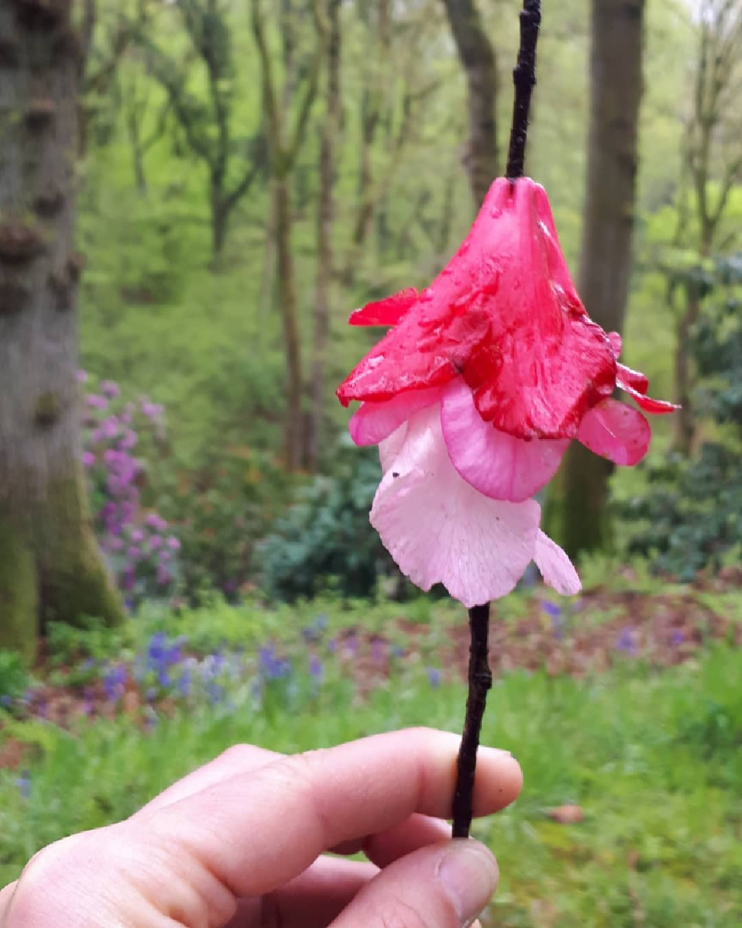 Collecting petals at Hergest Croft by Alice Draws the line