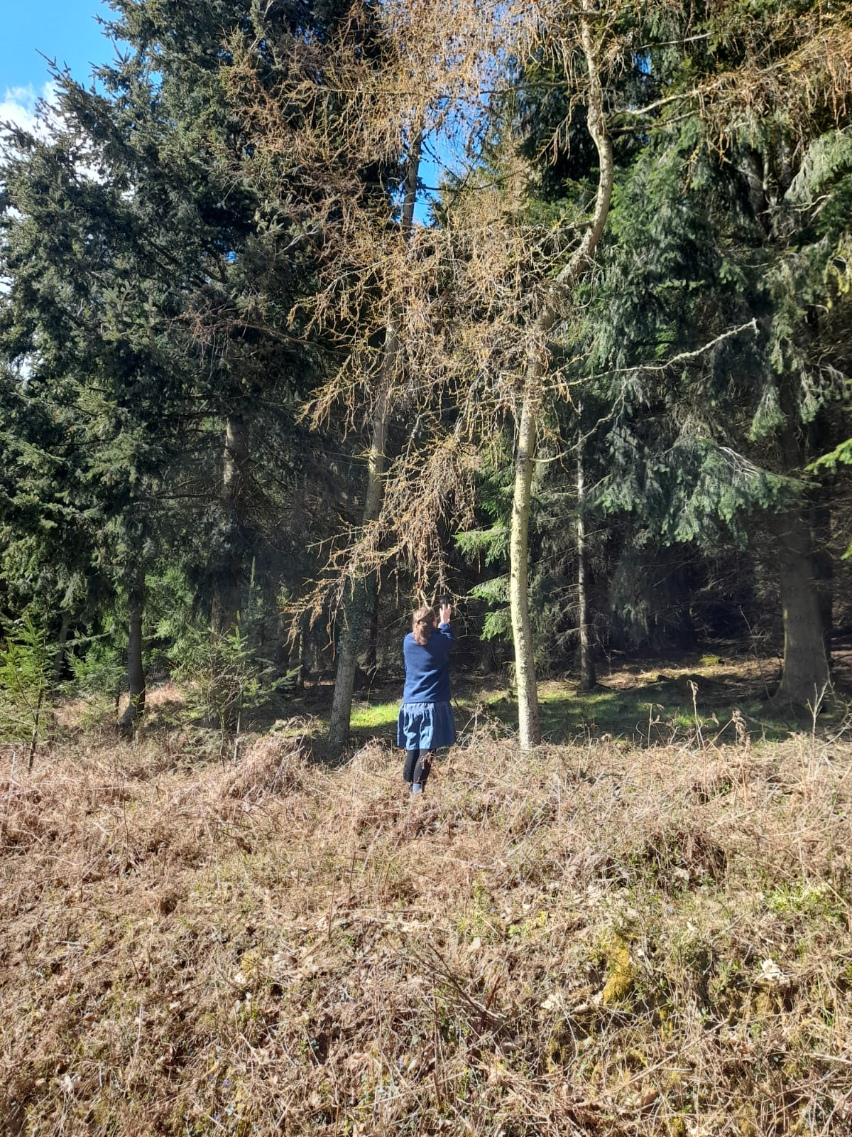 Alice Draws the Line photographing larch flowers in the wood blog post