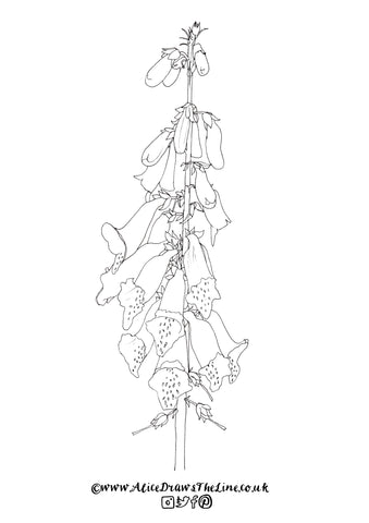 Foxglove botanical illustration by Alice Draws The Line to download and colour in