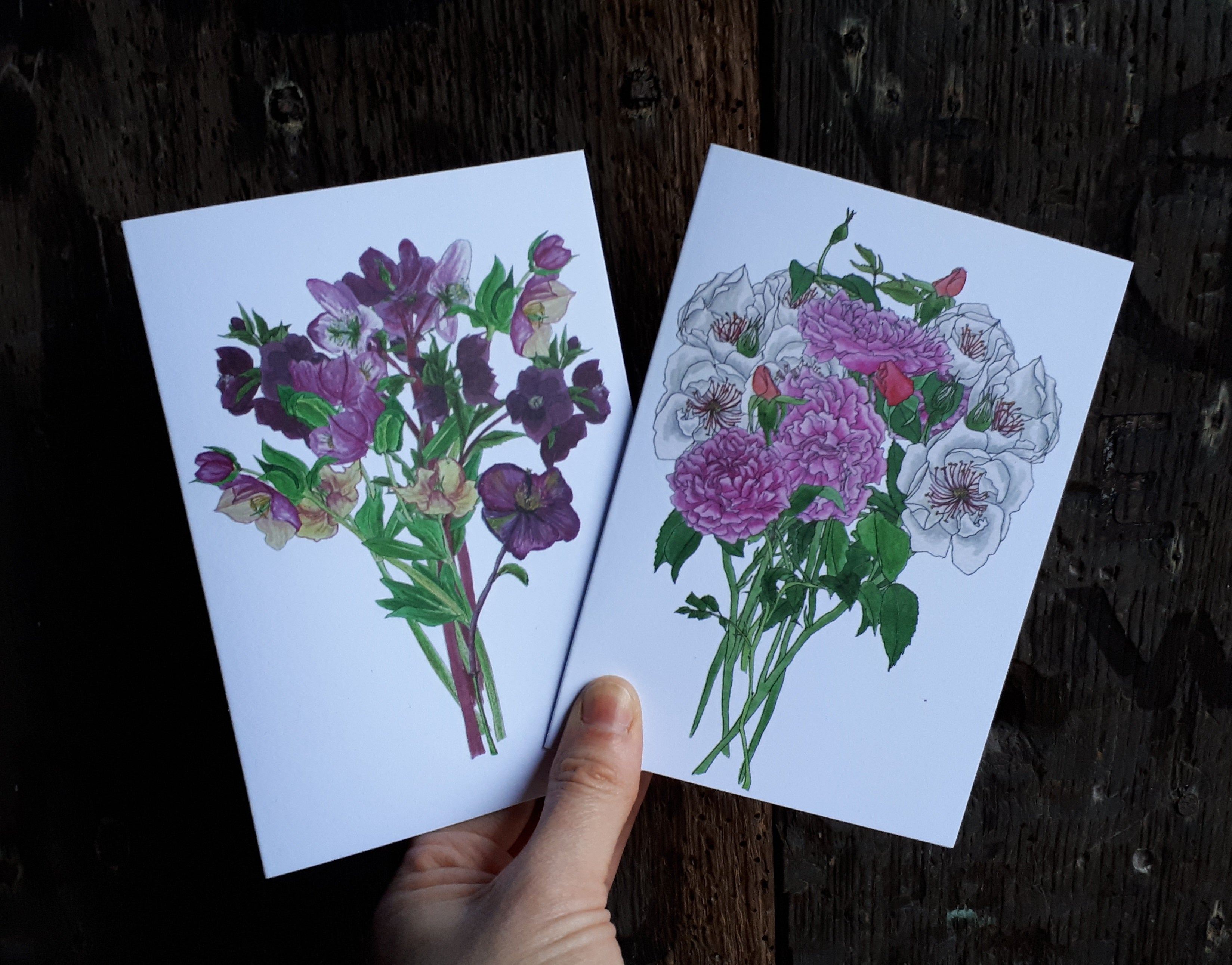 Hellebores and Roses greeting cards by Alice Draws the Line
