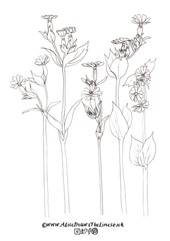 Red Campions to colour in by Alice Draws The Line, free colouring in sheet