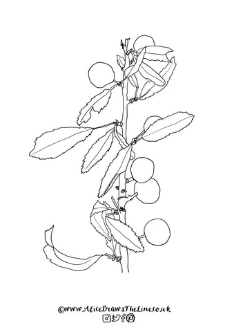 Sloes on Blackthorn by Alice Draws The Line Free botanical colouring in sheet