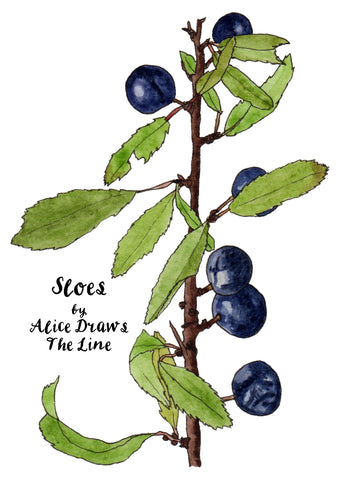 Sloes on the blackthorn by Alice Draws The Line