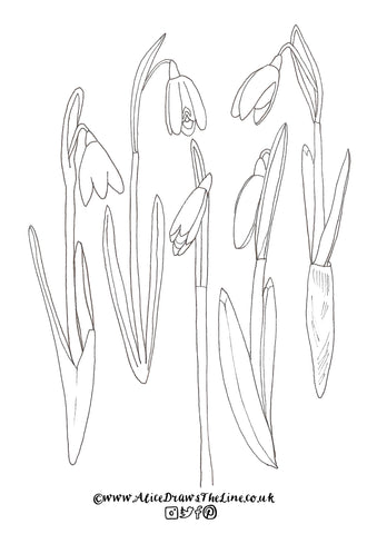 Snowdrops to Colour in, Free Downloadable colouring in sheet by Alice Draws The Line