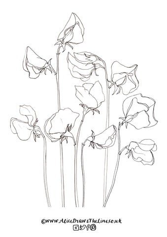 Sweet Peas downloadable botanical illustration by Alice Draws The Line