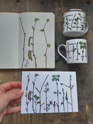 Tree identification sketches and products by Alice Draws The Line
