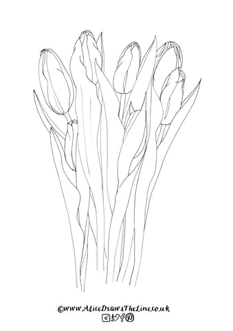 Free Botanical Illustration of Tulips to download, print and colour in by Alice Draws The Line