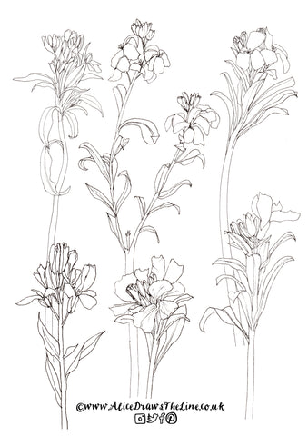 wallflowers to colour in by Alice Draws The Line