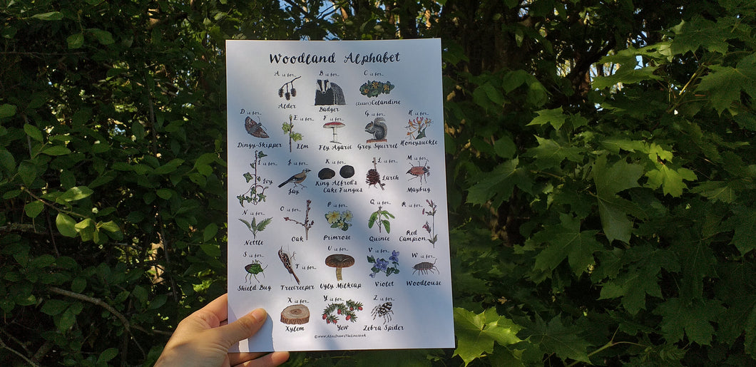 Woodland Alphabet print by Alice Draws The Line, printed on recycled paper, A4 or A3