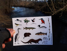Load image into Gallery viewer, River species sticker sheets by Alice Draws The Line