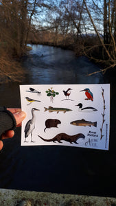 River species sticker sheets by Alice Draws The Line