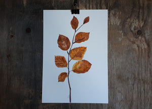Autumnal Beech leaves by Alice Draws The Line
