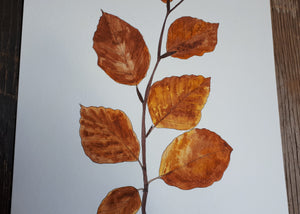 Autumnal Beech leaves detail by Alice Draws The Line