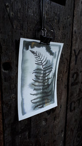 Black ink bracken study A5