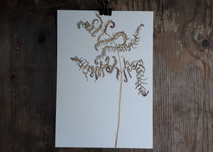 Bracken Illustration by Alice Draws the Line
