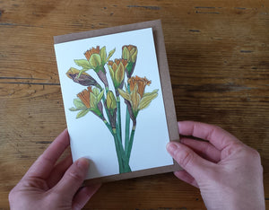 spring flowers greeting card collection, bluebells, snowdrops and daffodils by Alice Draws The Line
