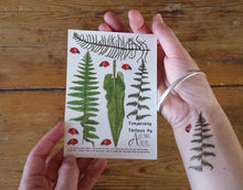 Load image into Gallery viewer, Ferns, Bracken and Ladybirds temporary tattoos by Alice Draws The Line