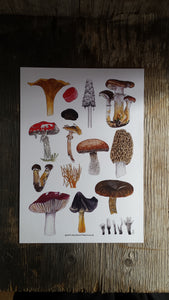 Fungi art print by Alice Draws The Line, A4 printed on recycled card, fly agaric, morel, chanterelle mushrooms art