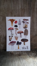 Load image into Gallery viewer, Fungi art print by Alice Draws The Line, A4 printed on recycled card, fly agaric, morel, chanterelle mushrooms art