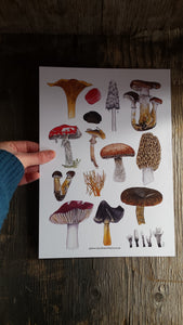 Mushroom art pint, fly agaric wall art, morel mushroom by Alice Draws The line