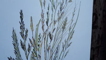 Load image into Gallery viewer, Grasses study by Alice Draws the Line