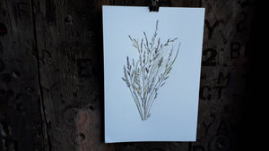 Grasses study by Alice Draws the Line