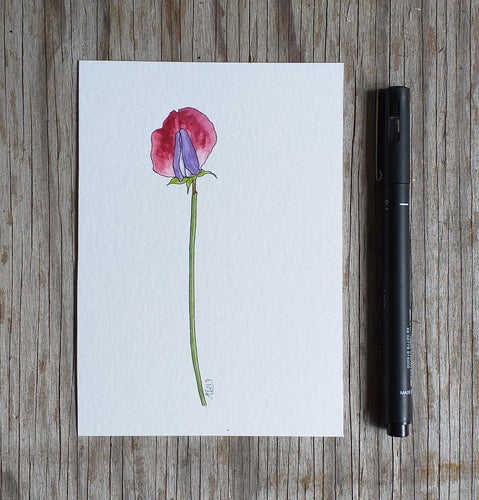 Sweet pea illustration