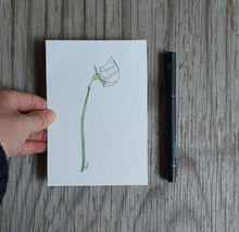 Load image into Gallery viewer, White sweet pea illustration