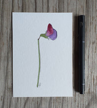 Load image into Gallery viewer, Purple Sweet pea illustration