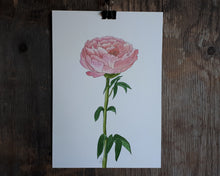 Load image into Gallery viewer, Pink Peony