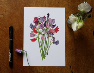 Sweet Pea art print by Alice Draws The Line, A5 botanical print on recycled card