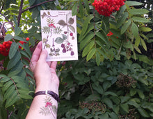 Load image into Gallery viewer, Tree, woodland and blackberry temporary tattoos by Alice Draws The Line