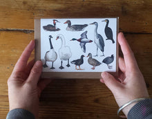 Load image into Gallery viewer, Ducks card by Alice Draws the Line, pond birds card