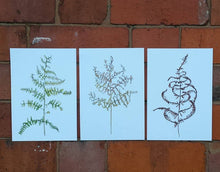 Load image into Gallery viewer, 3 Bracken Art Prints featuring a green, yellow and brown bracken study on A5 recycled card. Illustrations of bracken by Alice Draws The Line