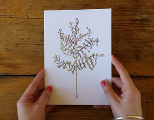3 Bracken Art Prints featuring a green, yellow and brown bracken study on A5 recycled card. Illustrations of bracken by Alice Draws The Line