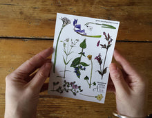 Load image into Gallery viewer, Woodland flowers sticker sheets by Alice Draws The Line; great for children's birthday party bags. A6 sheets of woodland flower stickers