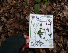 Load image into Gallery viewer, Woodland Flowers sticker sheet by Alice Draws The Line