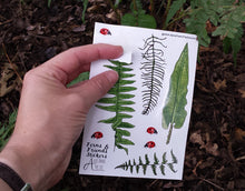 Load image into Gallery viewer, Fern, Bracken and Ladybird sticker sheets