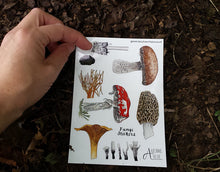 Load image into Gallery viewer, Fungi / Mushroom sticker sheets