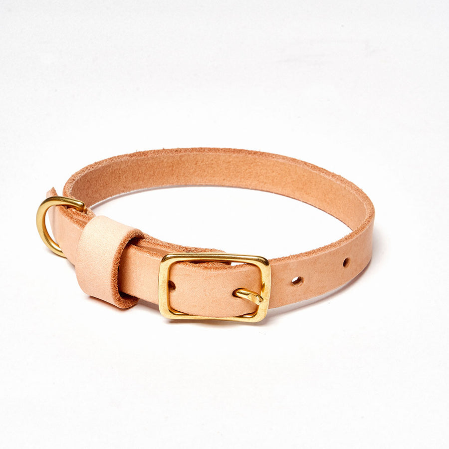 Young Pup Collar