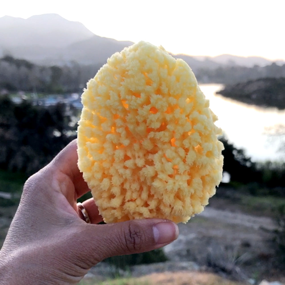 "Bath & Kitchen Natural Sea Sponge ""Spongy"""